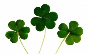 1-clovers-on-white-background