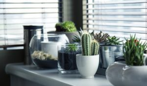 2-succulent-exhibition-on-window-sill